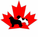 Newfoundland Dog Club of Canada